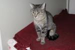 Olivia. Petite, Comical Cat Finds New Home