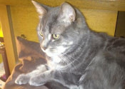 Jack. Male cat for adoption. Oasis Animal Rescue