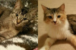 Lucy And Cookie. Abandoned Cats Seeking Loving Homes