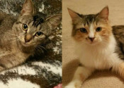 Lucy And Cookie. Abandoned Cats Seeking Loving Homes – UPDATE