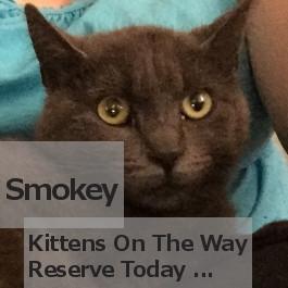 Smokey. Kittens for adoption coming soon. Oasis - GTA, Toronto, Durham pet rescue