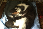 Kasia, Jerome and Elron. Brin's Kittens – Homes Desperately Needed