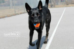 Zeus. Abused Dog Needs Pack Leader, Supportive Home