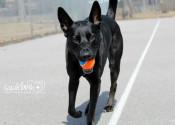 Zeus. Rescue dog for adoption