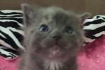 Rescue Cat Melanie And Her Kitten Cutie. UPDATE
