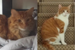 Max And Toopy. Cats Hoping To Be Re-Homed Together