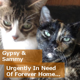 Cats for adoption - Sammy and Gypsy, Oasis Animal Rescue