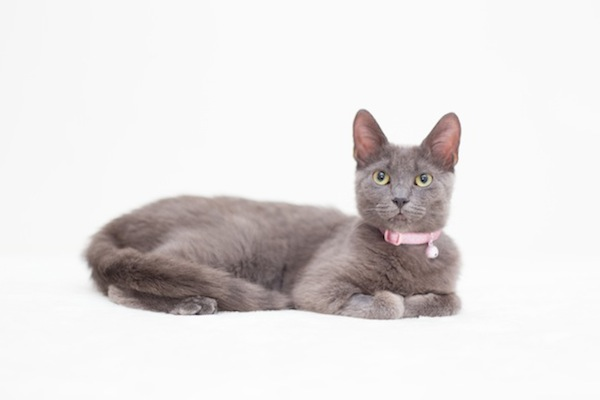 Sparkles. Cat for adoption. Oasis Animal Rescue. Toronto GTA, Durham Region