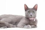 Sparkles (A.K.A. Momma Cat Smokey). Deserves A Loving Home