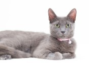 Sparkles. Cat for adoption. Oasis Animal Rescue. Toronto GTA, Durham Region
