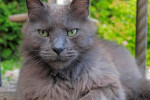 Eugenie. Affectionate Cat Doesn't Deserve To Be Homeless