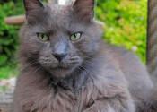 Eugenie. Cat for adoption. Oasis Animal Rescue, Durham Region