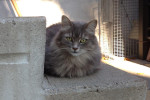 Clock Ticking! Five Cats In Need Of Urgent Help