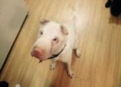 Penelope. Dog for adoption