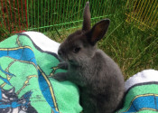 Lily. Rabbit for adoption. Oasis Animal Rescue