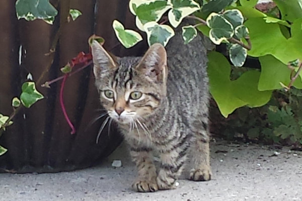 Neeko. Special Kitten Abandoned. For adoption. Contact Oasis Animal Rescue