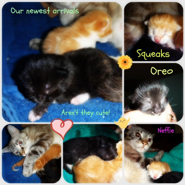 Neffie. Cat and kittens for adoption. Oasis Animal Rescue