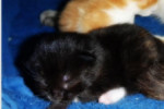 Neffie. Rescue Cat Delivers Two Kittens, Squeaks And Oreo