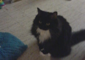 Jasmine. Playful Cat Needs To Find New Home Soon