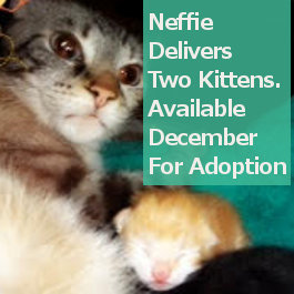 Rescue Cat, Kittens Available Soon For Adoption. Contact Oasis Animal Rescue