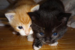Neffie And Her Kittens, Squeaks And Oreo – Adopted