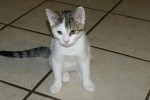 Wilma. Adorable Kitten Finds Her Forever Home