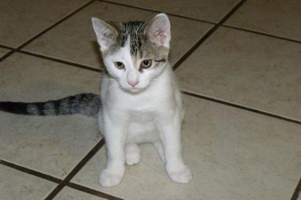 Wilma. Kitten for adoption. Oasis Animal Rescue
