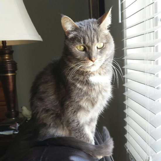 Adopted cat Jack. oasisanimalrescue.ca