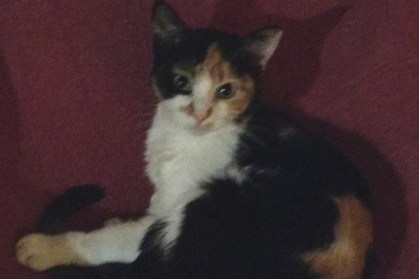 Ellie. Kitten sadly passed away.