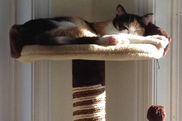 Ellie. RIP Kitten passed away.