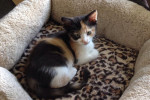 RIP Kitten Ellie. Sadly Passed One Day Before First Birthday