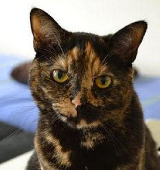 Mona. Cat for adoption. Durham Region, GTA, Oasis Animal Rescue