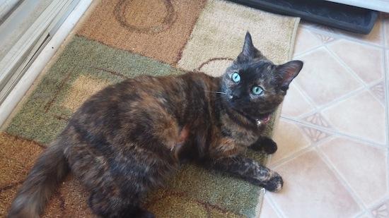 Adoptable cat Mona. oasisanimalrescue.ca