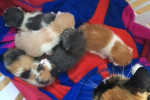 Josie's Kittens. All Five Now Adopted
