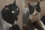 Shilah and Makita. Owner Health Issues Force Cat Re-Homing