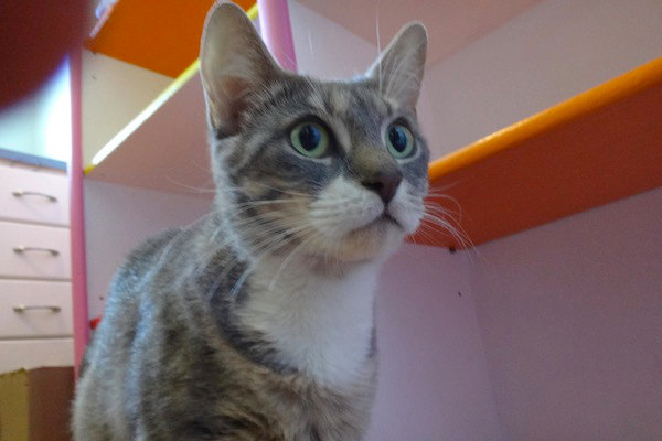 Beatrice. Momma Cat seeking her own forever home. oasisanimalrescue.ca