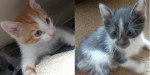 Jonah & Sunshine. Playful Kittens Find Their Forever Home