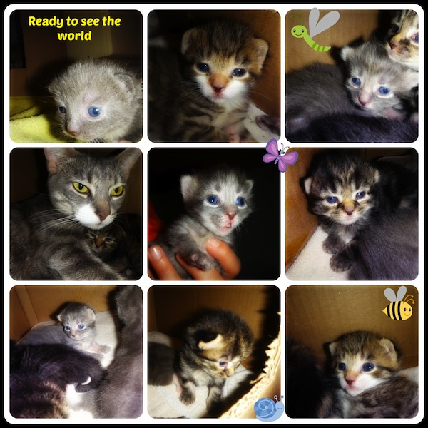 Beatrice and kittens for adoption. Oasis Animal Rescue
