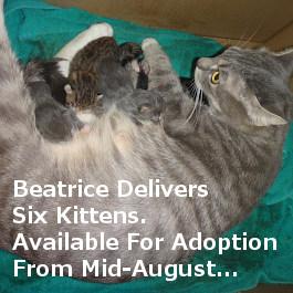 Beatric & Kits for adoption. Toronto GTA, Oasis Animal Rescue