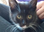 Roxy. Playful Kitten For Adoption Is Full Of Fun