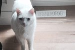 Jazz. Affectionate Cat Urgently Requires Foster Or Forever Home
