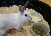 Dumby. Sweetest Rabbit For Adoption