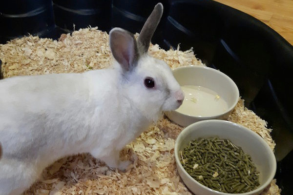 Dumby. Rabbit for adoption. Oasis Animal Rescue