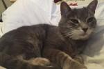 Tegan. Senior, Companion Cat Needs Loving Home