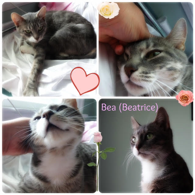 Beatrice. Cat needs a home. Contact Oasis Animal Rescue, Toronto GTA