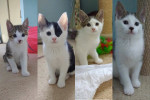 Panda And Her Four Kittens For Adoption