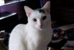 Anna. Stunning Feline Seeks Relaxing New Home