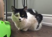 Moo. Really Sweet Cat Looking For New Home