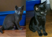 Midnight And Shady. A Rocky Start For These Adoptable Kittens