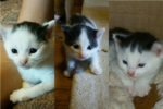 Patches, Speckles & Marble. Kittens Find Their Forever Homes